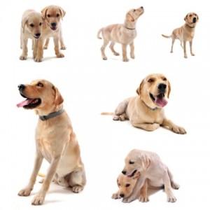 תקיפה על ידי כלב - קבלת פיצוי על נזקים
